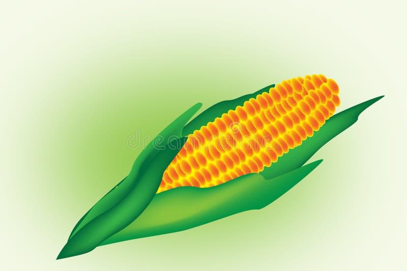 Corn royalty free illustration