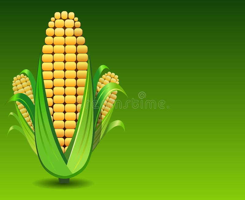 Download Corn stock illustration. Image of yellow, harvest, autumn - 17924081