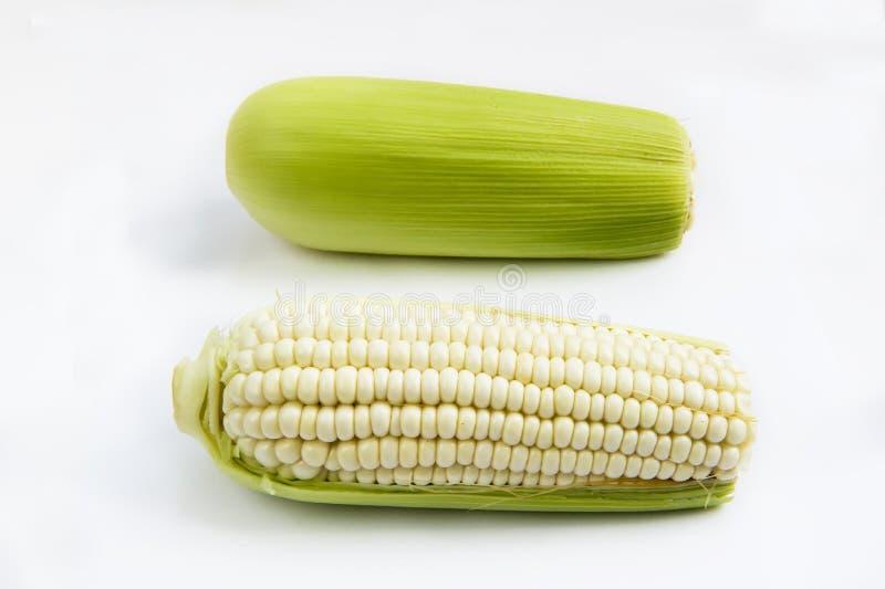 Download Corn stock photo. Image of maize, corn, food, high, plants - 20096310