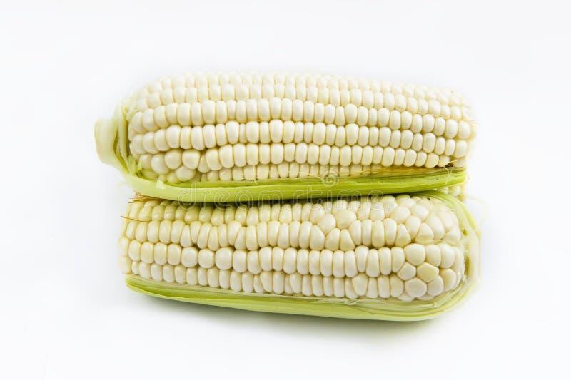 Download Corn stock photo. Image of corn, high, farmers, maize - 20096328