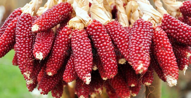 Download Corn stock photo. Image of farm, corn, food, diet, vegetables - 20650054