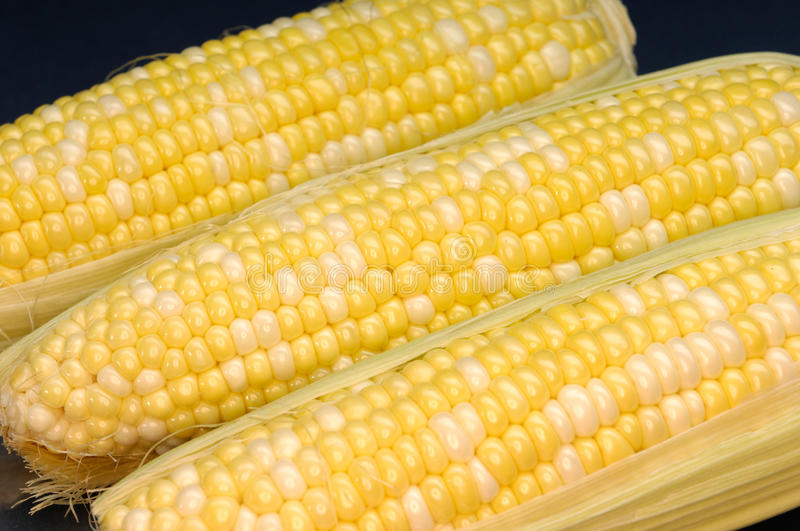 Download Corn stock photo. Image of vivid, objects, corn, food - 20996394