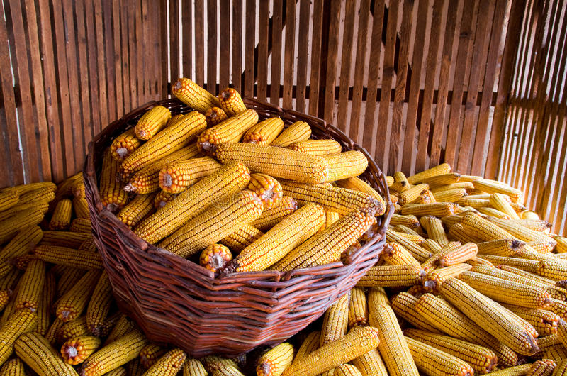 Download Corn stock photo. Image of farm, autumn, food, storage - 22507372