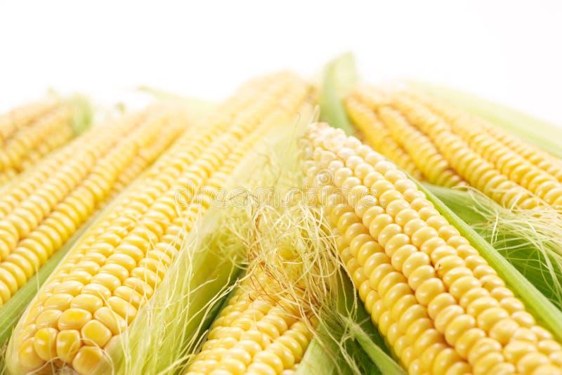 Download Corn stock photo. Image of grain, nutrition, produce - 23615864