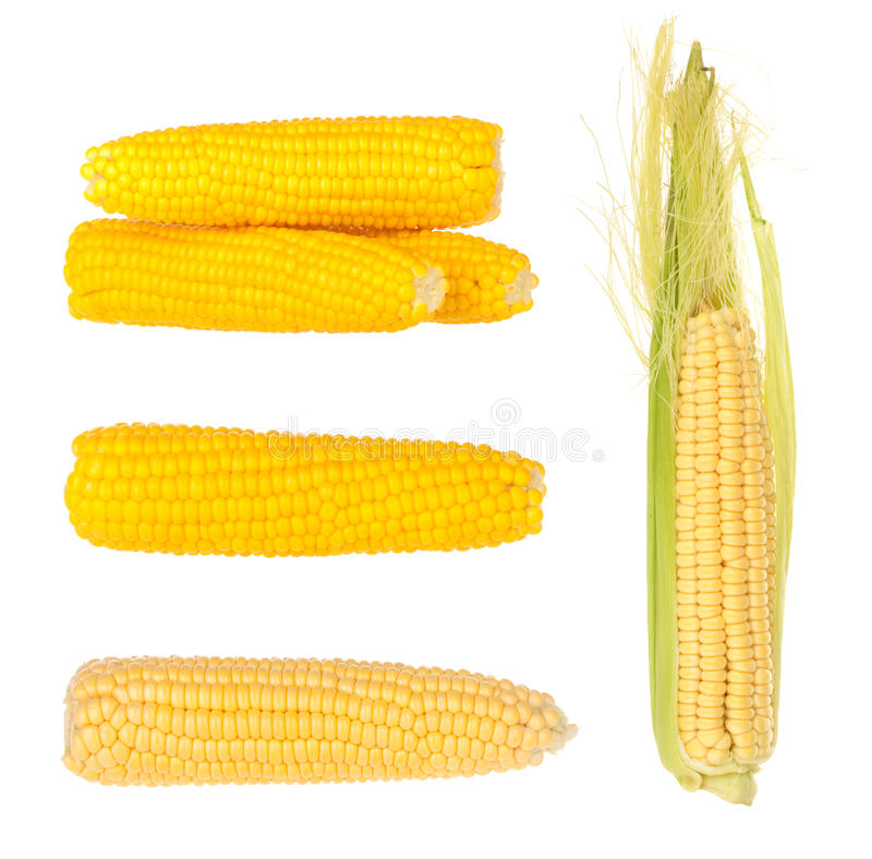 Download Corn stock image. Image of fresh, fuel, harvest, agriculture - 26116597