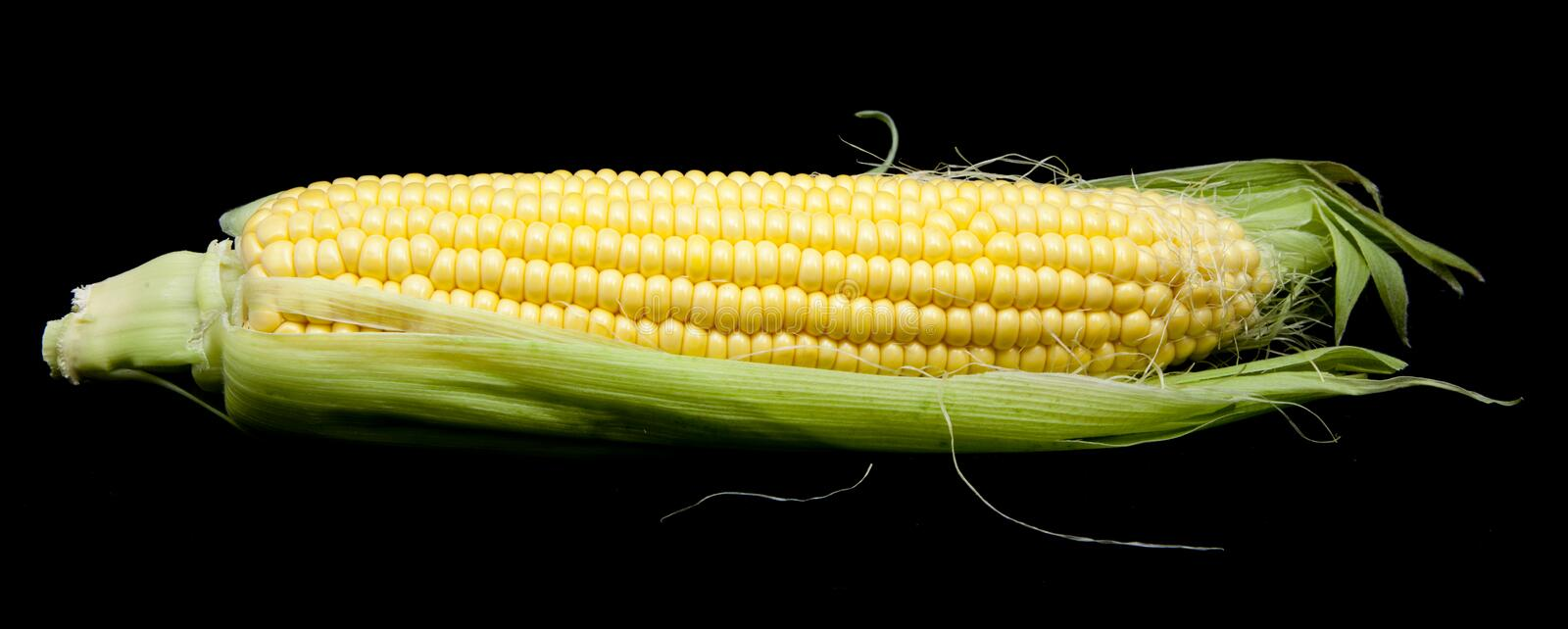 Download Corn stock photo. Image of health, whole, green, white - 28152608