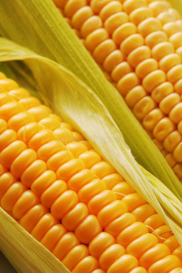 Free Corn Royalty Free Stock Photo - 3245875