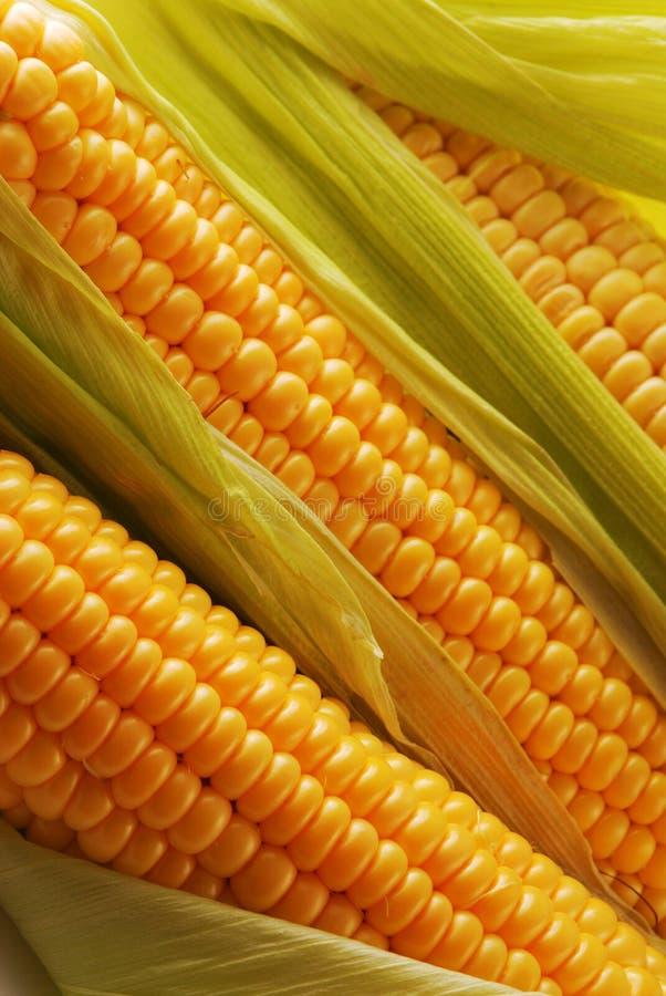 Free Corn Stock Photography - 3681952