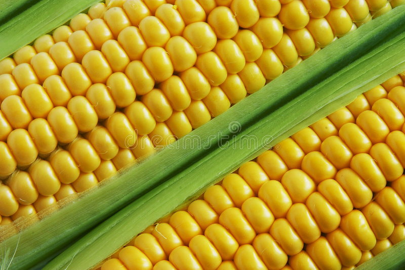 Corn. Close up view of the Corn on Cob stock photography