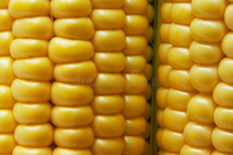Download Corn stock image. Image of pick, pastel, corncob, fresh - 517165