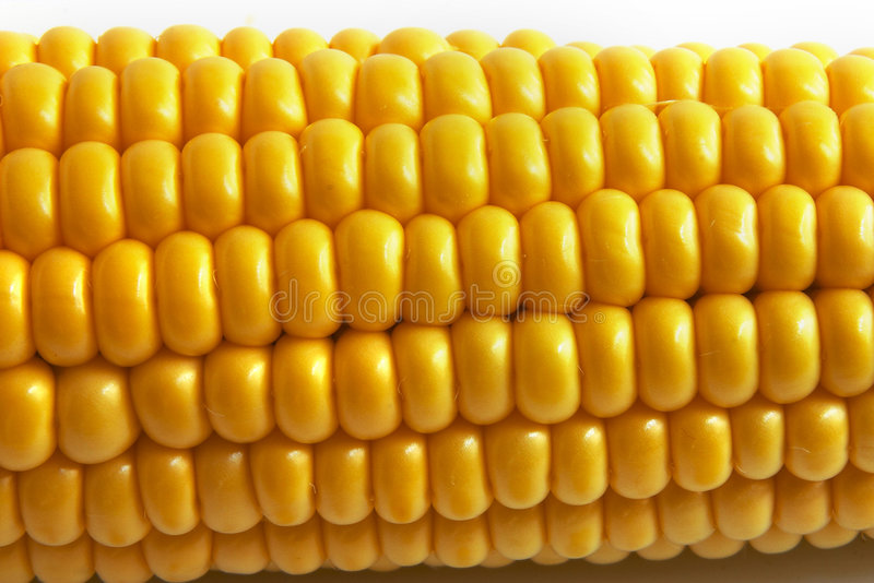 Download Corn stock photo. Image of image, objects, backgrounds - 518796