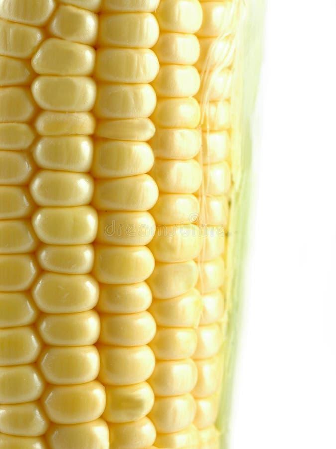 Corn. Macro corn in white background