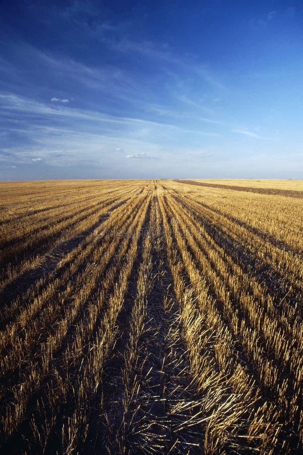 Free Corn Stock Photo - 568820
