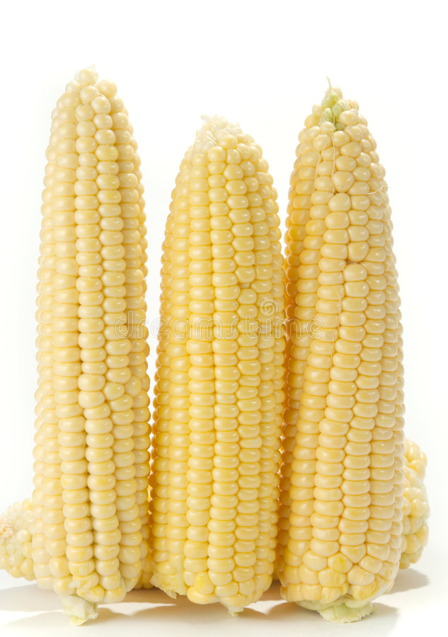Download Corn stock photo. Image of natur, snack, corn, eating - 5719656