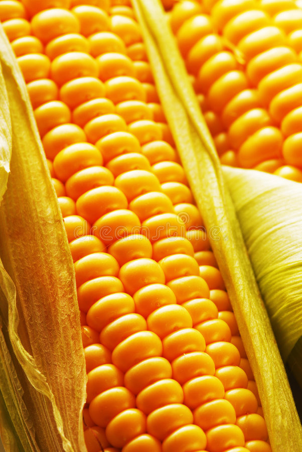Free Corn Royalty Free Stock Photo - 5976715