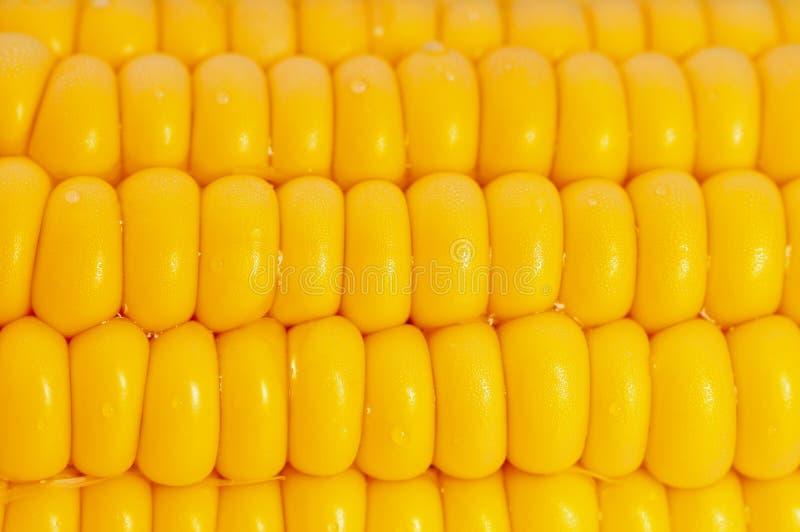 Download Corn Stock Image - Image: 6351041