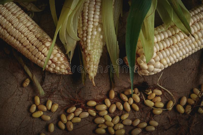 Corn and beans. Corn with bean seed on wood and a nice background stock photo