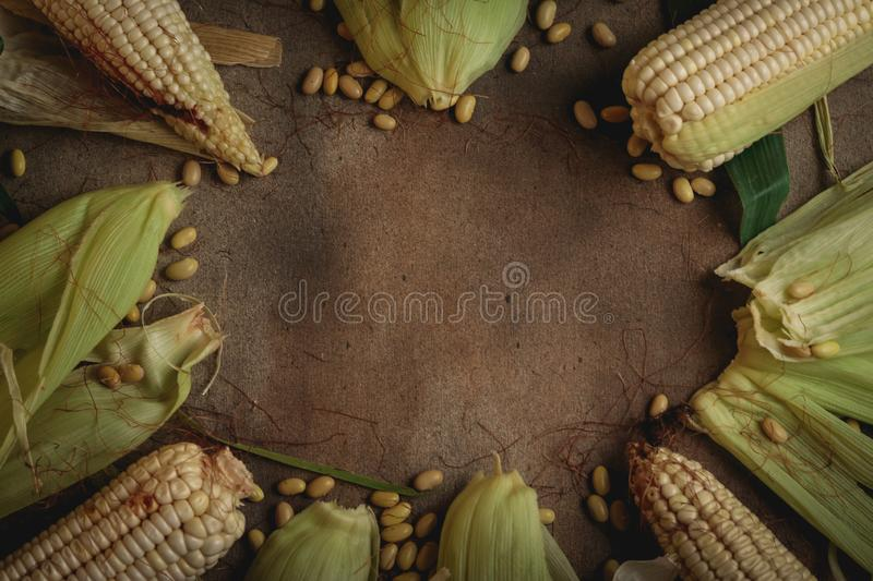 Corn and beans. Corn with bean seed on wood and a nice background royalty free stock photography