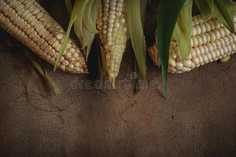 Corn and beans. Corn on wood and a nice background stock photos
