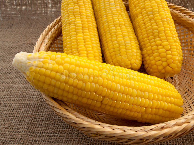 Corn boil. Put in the basket stock photography