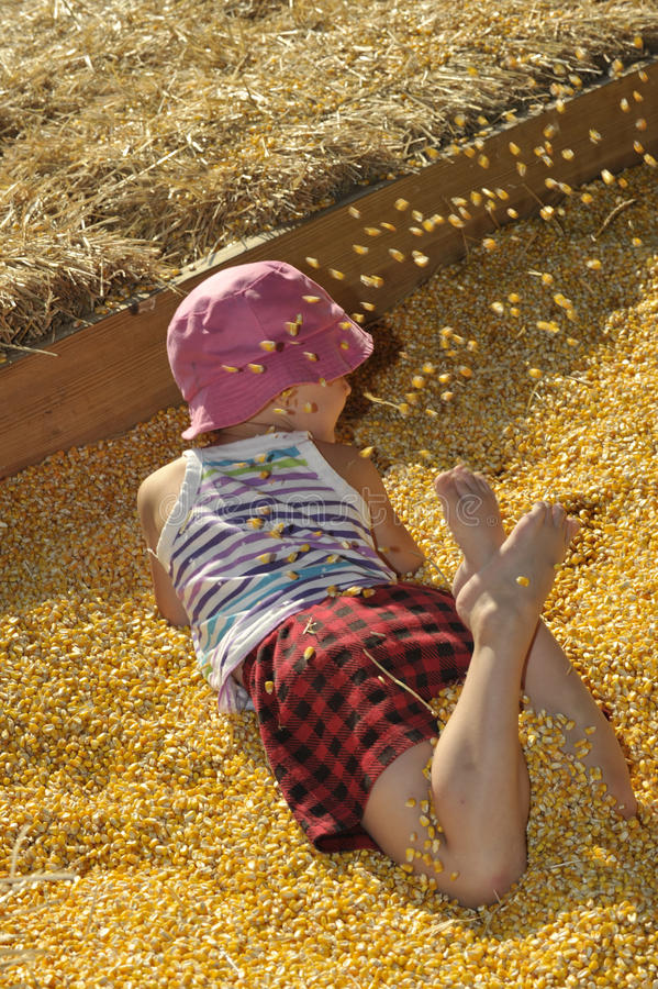 Download Corn Box stock image. Image of amusement, frolic, corn - 26797745