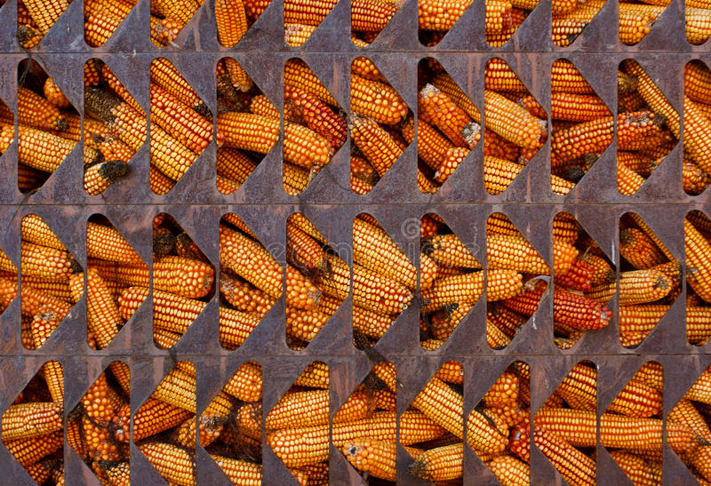 Download Corn in cage stock photo. Image of fruit, winter, pattern - 27913938