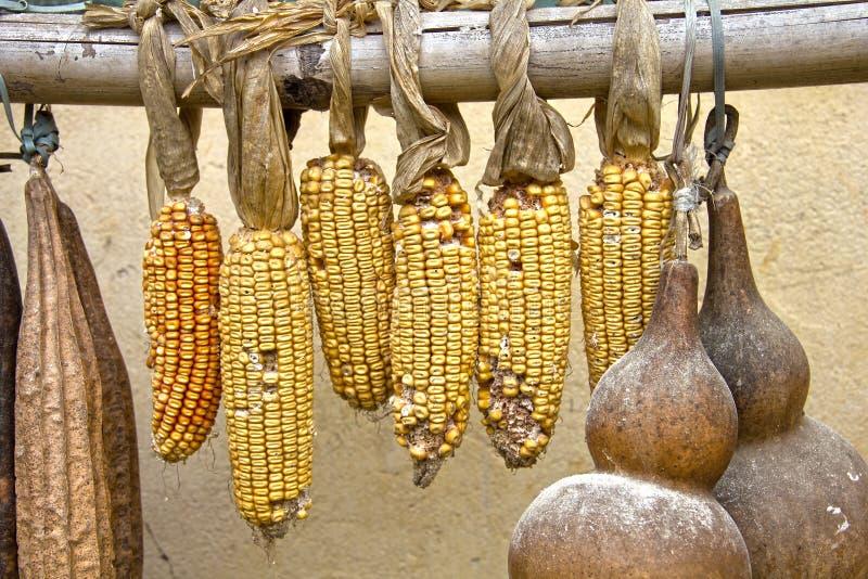 Corn and calabash fruit drying stock photo