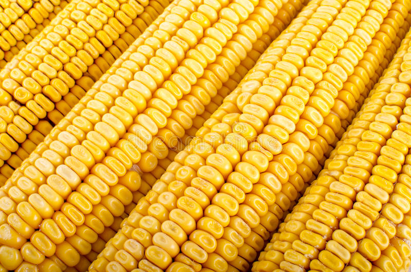 Corn close up. Abstract background stock images