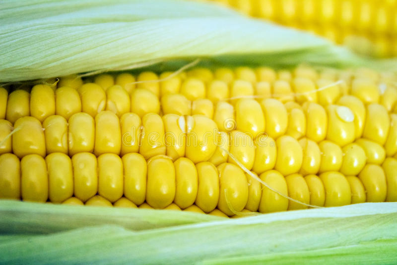 Corn close-up image royalty free stock photography