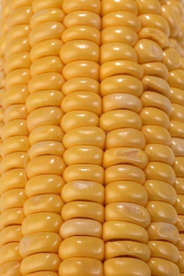 Corn on the cob stock image