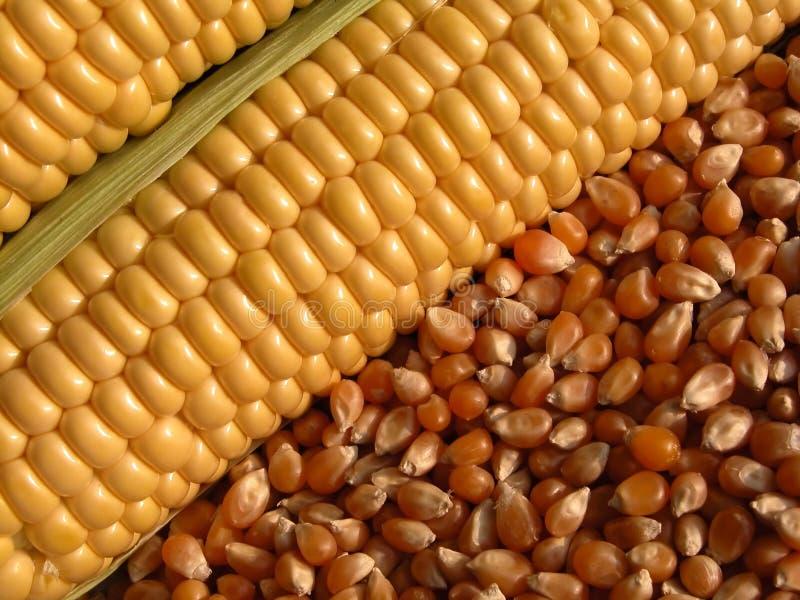 Download Corn-cob Stock Images - Image: 176384