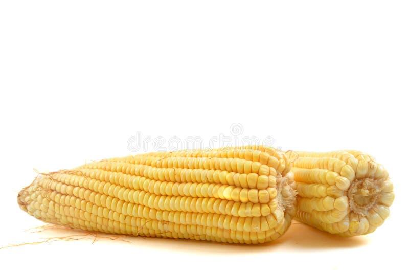 Corn-cob image libre de droits