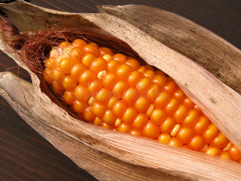 Corn-cob royalty free stock photos