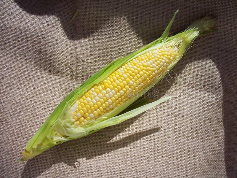 Corn on the Cob 4 royalty free stock photos