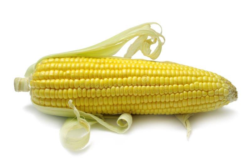 Corn Cob stock image