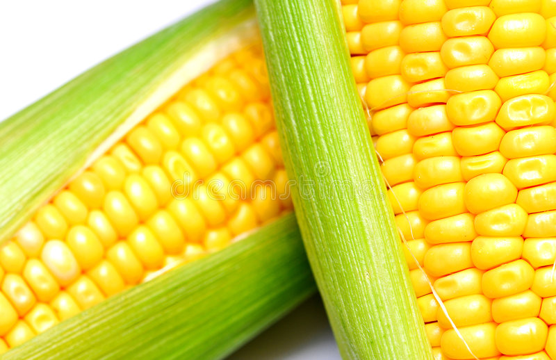 Corn cob. Corn con on white background royalty free stock images