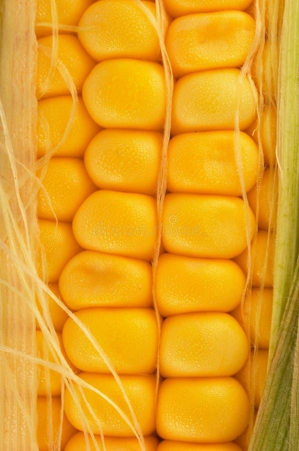 Corn on cob closeup stock images