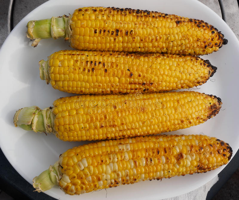 Corn on the cob grilled on barbecue laid on a white plate royalty free stock images