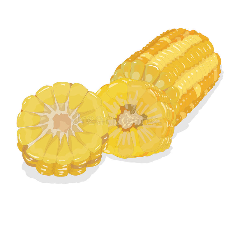 Download Corn on the cob stock vector. Image of ingredient, golden - 83713822