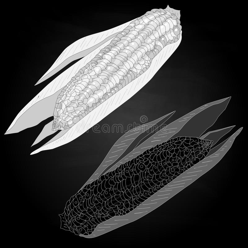 Download Corn On The Cob Kernels Stock Vector - Image: 83713949