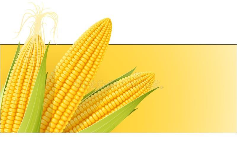 Corn cob. Organic food. vector illustration