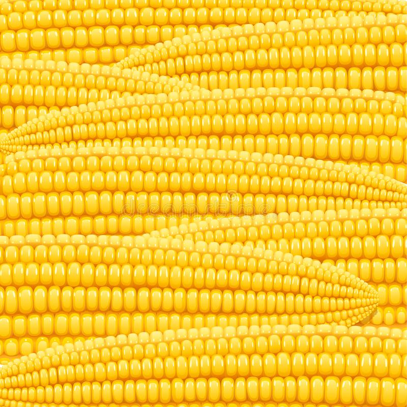 Corn cob. Organic food pattern. royalty free illustration