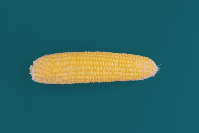 Corn cob på blå bakgrund arkivfoton
