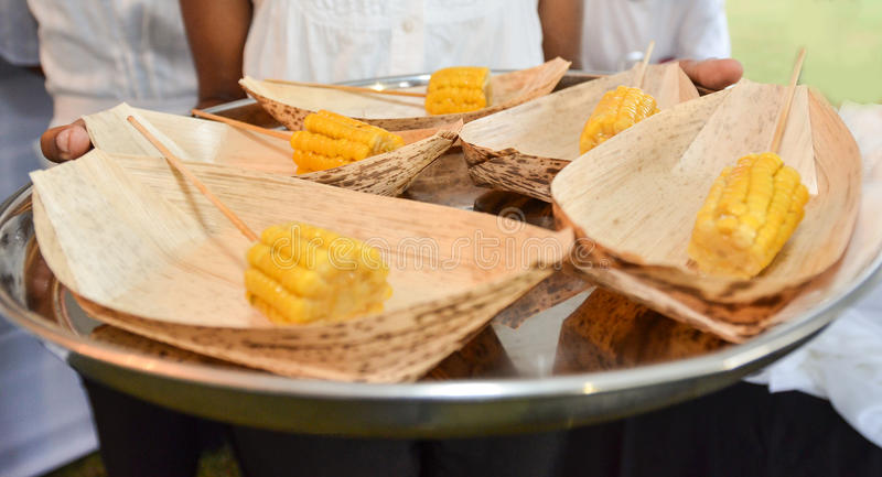 Corn on the cob served. A tray of cooked corn on the cob royalty free stock photo