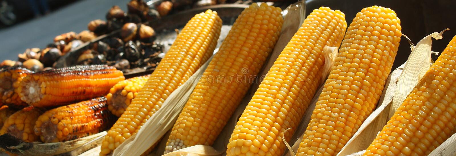 Corn on the cob at a street food stall.  royalty free stock photo