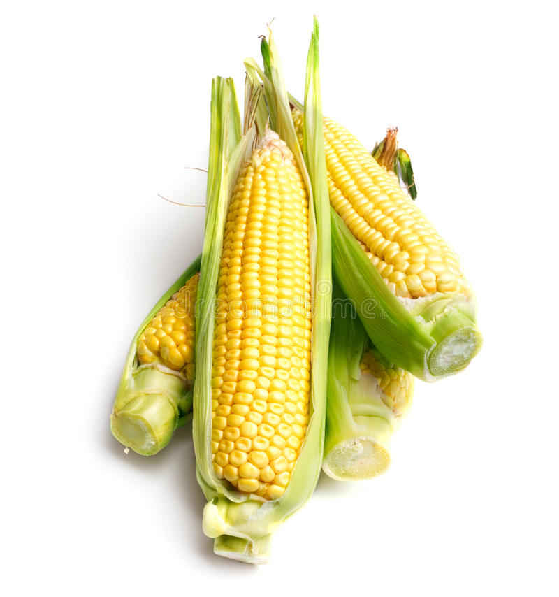 Free Corn Cobs Royalty Free Stock Photography - 16893807