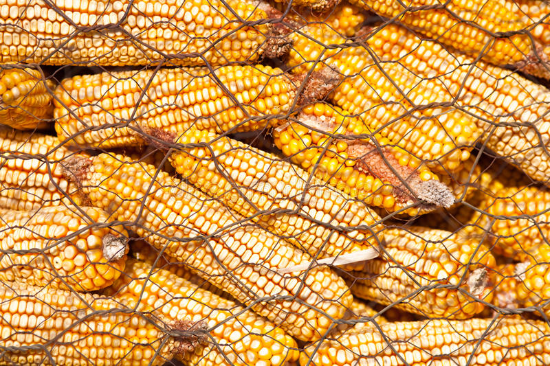 Download Corn cobs stock image. Image of nature, wired, store - 17921933
