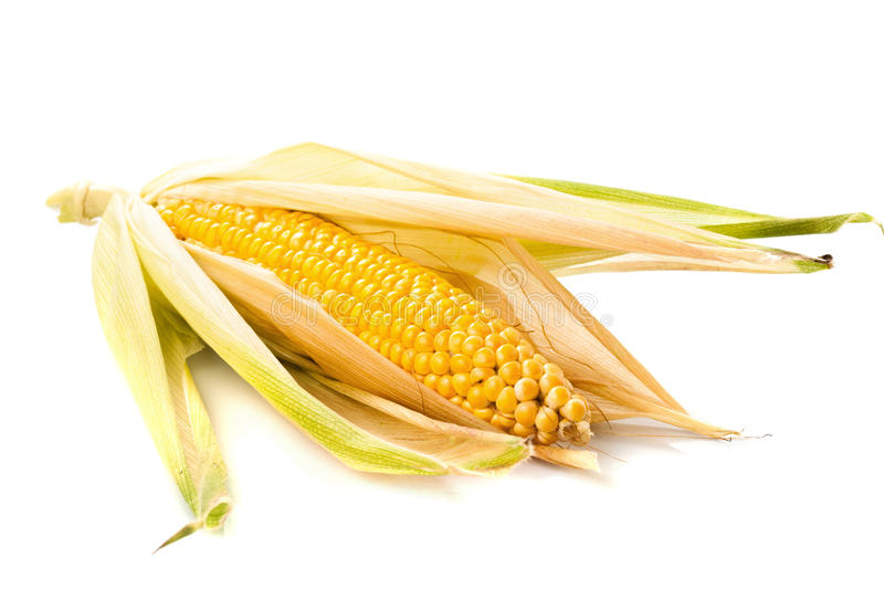 Corn cobs. On white background royalty free stock images
