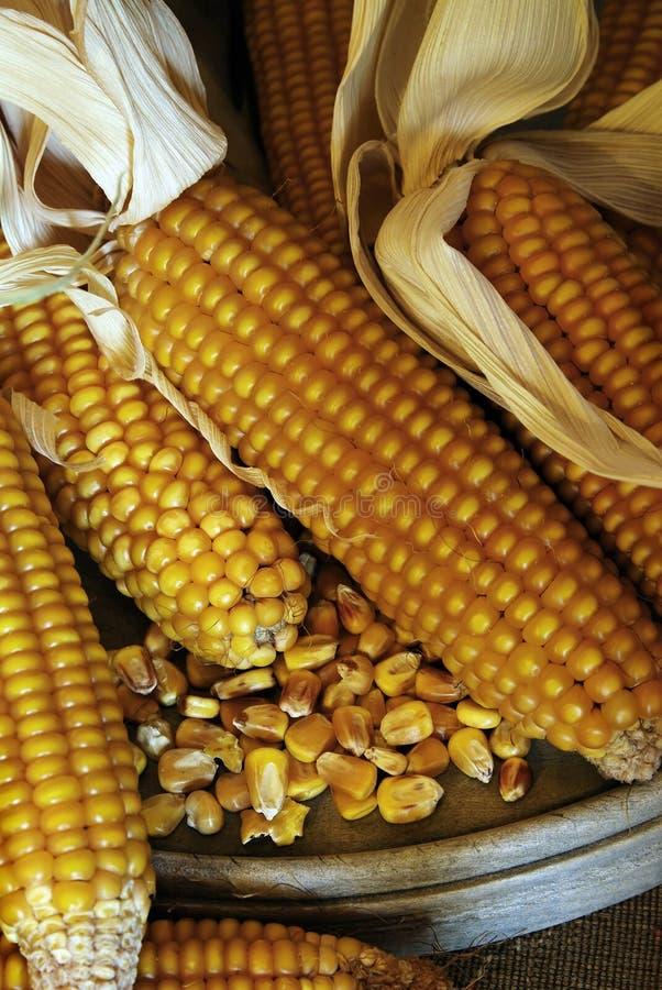 Download Corn Cobs - Grain Maize Stock Image - Image: 12877731