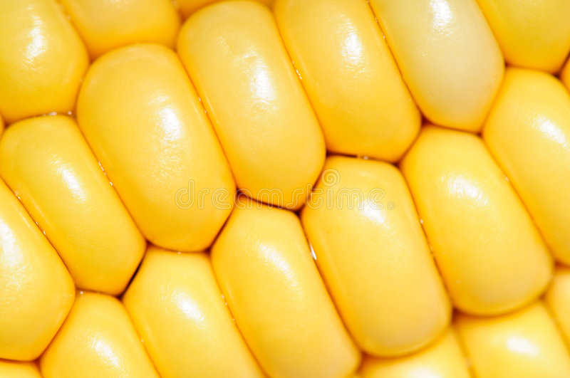 Download Corn cobs macro texture stock photo. Image of closeup - 7192812